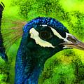 Peacock by Ilia Skulovich