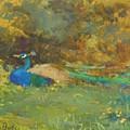 Peacock In A Garden by Butler Mildred Anne