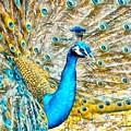 Peacock Paradise by Charmaine Zoe