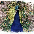 Peacock Vignette by Alice Gipson