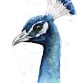 Peacock Watercolor by Olga Shvartsur