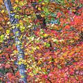 Peak Color by Diane Moore