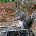 Peanut Feast by Sue Melvin