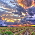 Peanuts, Clouds And Sun by Reid Callaway