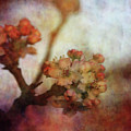 Pear Blossom Sunset 8930 Idp_2 by Steven Ward