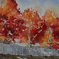 Pear Trees Fall Afternoon by Martha Tisdale