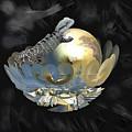 Pearl Egg Lizard by Yolanda Caporn