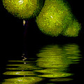 Pears And Its Reflection by Galeria Trompiz