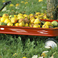 Pears In A Wagon by Gordon Wood