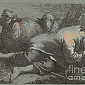 Peasant Boy Asleep Near Two Sheep by Francesco Londonio