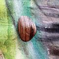 Pebble  by Augusta Stylianou