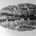 Pecan Nut Macro Black White 2967 by David Haskett II