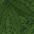 Pecan Tree Leaves by Sandra Gallegos