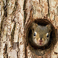 Peek A Boo 2 by Karin Pinkham