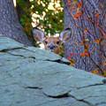 Peek A Boo by David Henningsen