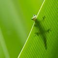 Peek A Boo Gecko by Christina Lihani