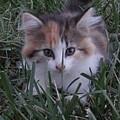 Peek A Boo Kitty by Deb Rassel