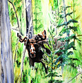 Peek A Boo Moose by Tracy Rose Moyers
