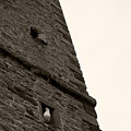 Peek-a-boo Pigeon by Julia Raddatz