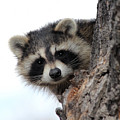 Peek-a-boo by Shane Bechler