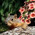 Peek-a-boo Squirrel by Sheila Brown