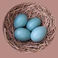 Peek Into A Robin's Nest by Shirleyanne Ratajczak