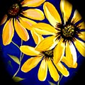 Peekaboo Sunflowers by Kathy Othon