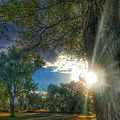 Peekaboo Tree by Tim Abshire