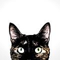 Peeking Cat by Nicklas Gustafsson