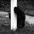Peeking Kitty Black And White by Marina McLain
