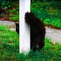 Peeking Kitty by Marina McLain