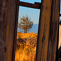 Peeking Thru by Laura Ragland