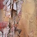 Peeling Bark by Carol Groenen