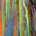 Peeling Bark- St Lucia. by Chester Williams