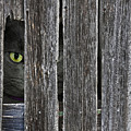 Peeping Tom by Maria Dryfhout