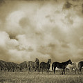 Peeples Valley Horses In Sepia by Priscilla Burgers