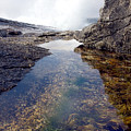 Peggy's Cove Tide Pool by Steve Somerville