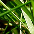 Pei Grass - Bottom by John Julio