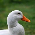 Pekin Duck 20120507_142 by Tina Hopkins