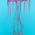 Pelagia Noctiluca Jellyfish by Corey Ford