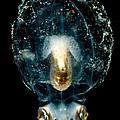 Pelagic Octopus by Dant� Fenolio