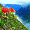 Peles Flower by James Temple