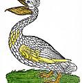 Pelican, 1560 by Granger