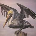 Pelican 2 Wings Spread by Judy Merrell