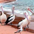 Pelican 5.0 Pearl Beach by Giro  Tavitian