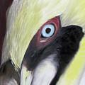 Pelican Closeup 1 by Judy Merrell