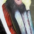 Pelican Closeup 2 by Judy Merrell