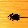 Pelican Cruising At Sunset In Key West by Bob Slitzan