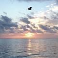 Pelican Dawn by Barbara Von Pagel