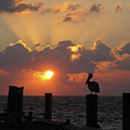 Pelican Dawn by Paul Westcott